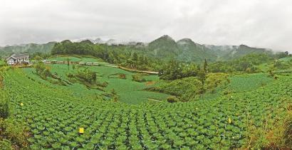 青山茶叶实验农场地图
